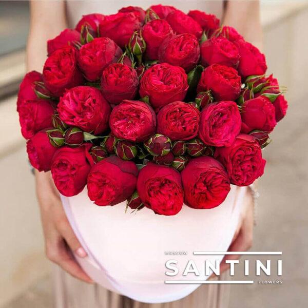Коробка пионовидных роз Red Piano