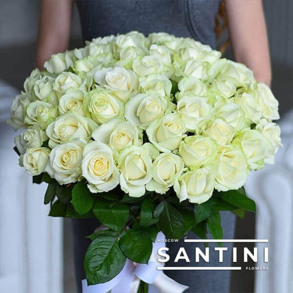 51 белая роза Avalanche 50 см
