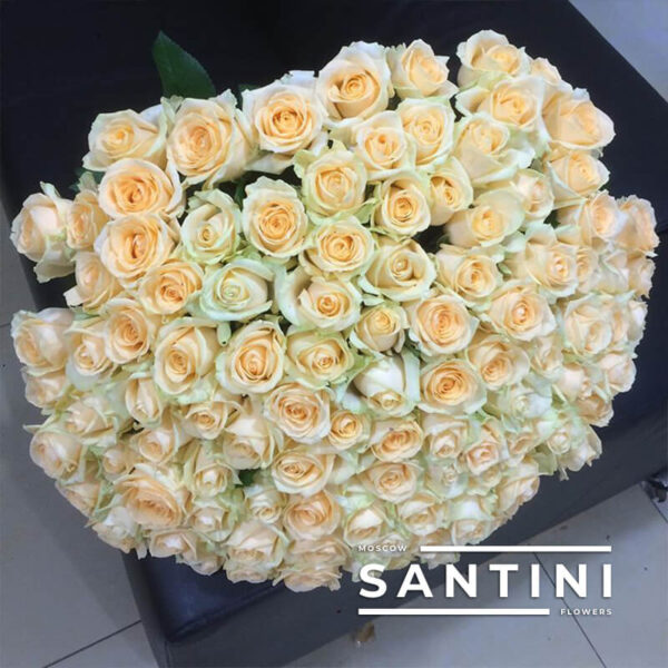 101 кремовая роза Talea 60 см