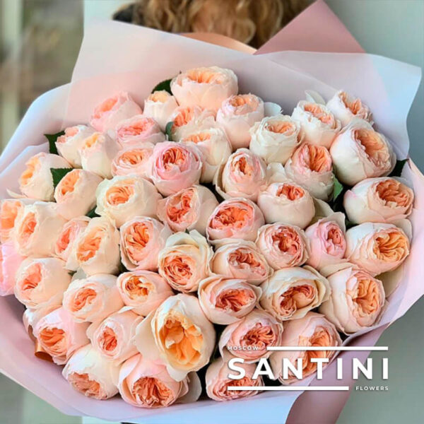 51 роза David Austin 50 см
