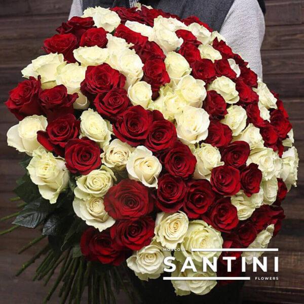 101 красно-белая роза 80 см
