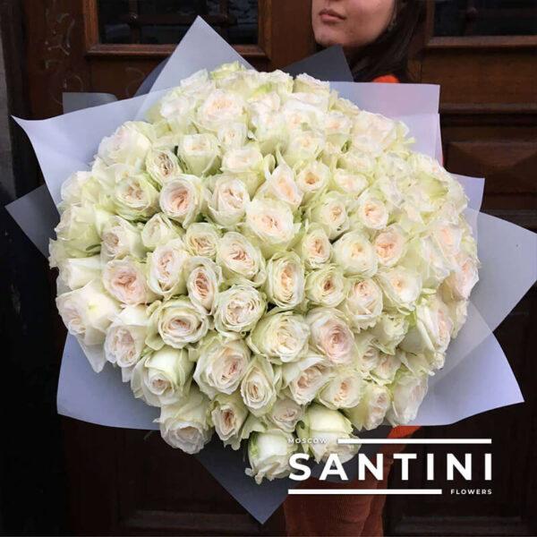 101 роза White O'Hara 50 см