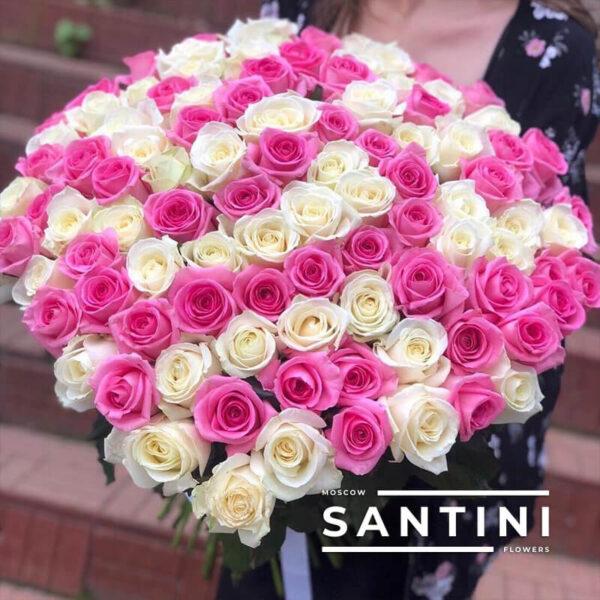 101 бело-розовая роза 60 см