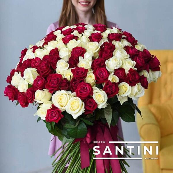 "<span style=""color: #ff0000;"">ХИТ</span> - 101 красно-белая роза 70 см"