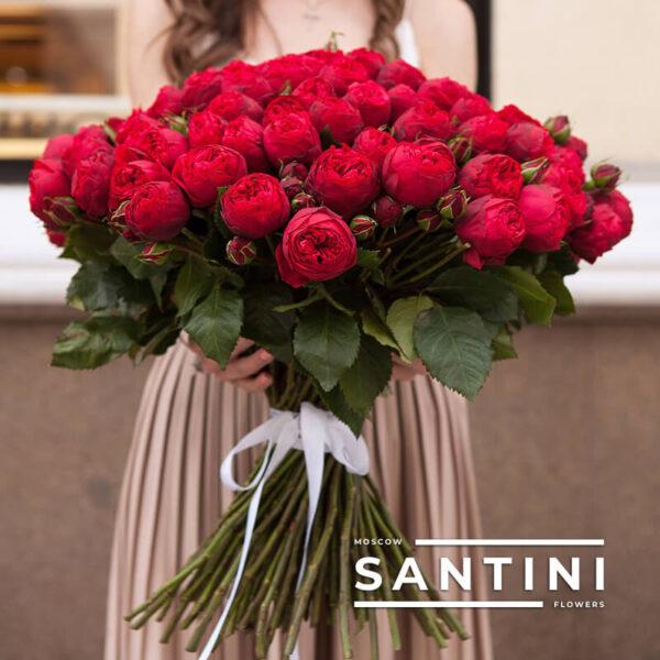 101 пионовидная роза Red Piano 50 см