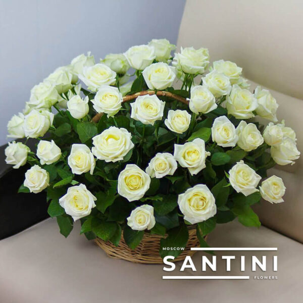51 белая роза Avalanche в корзине
