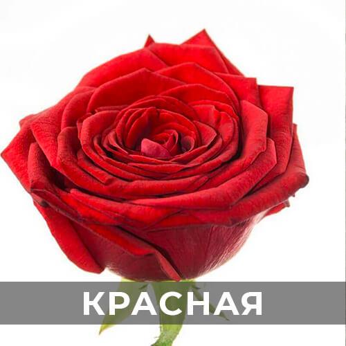 dostavka-cvetov-293