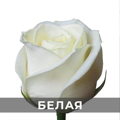 dostavka-cvetov-294