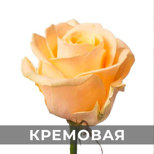 dostavka-cvetov-295
