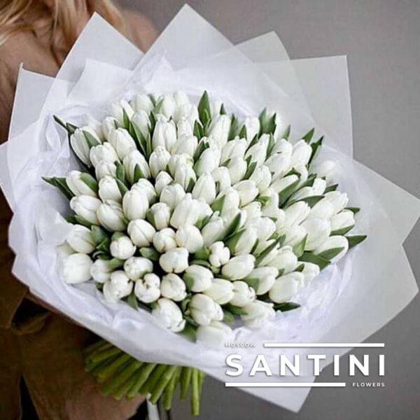 101 белый тюльпан White Dynasty