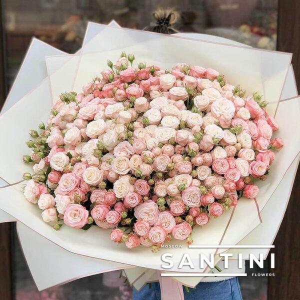 51 Кустовая пионовидная роза Madam Bombastic
