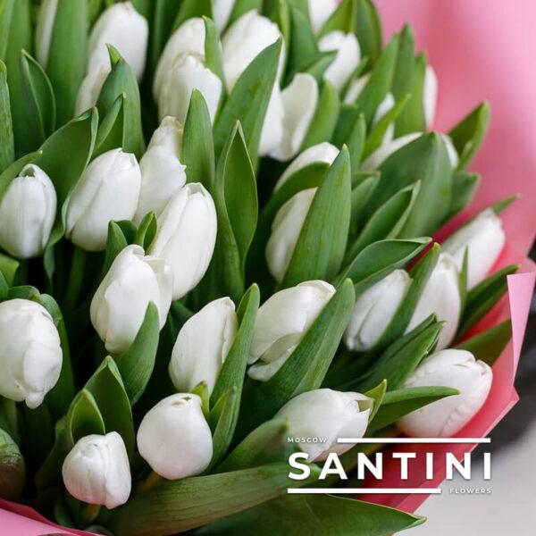 101 белый тюльпан «White Prince»