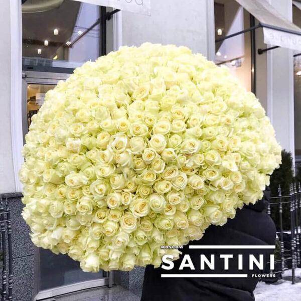 201 белая роза 80 см