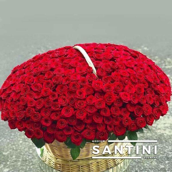 301 красная роза в корзине
