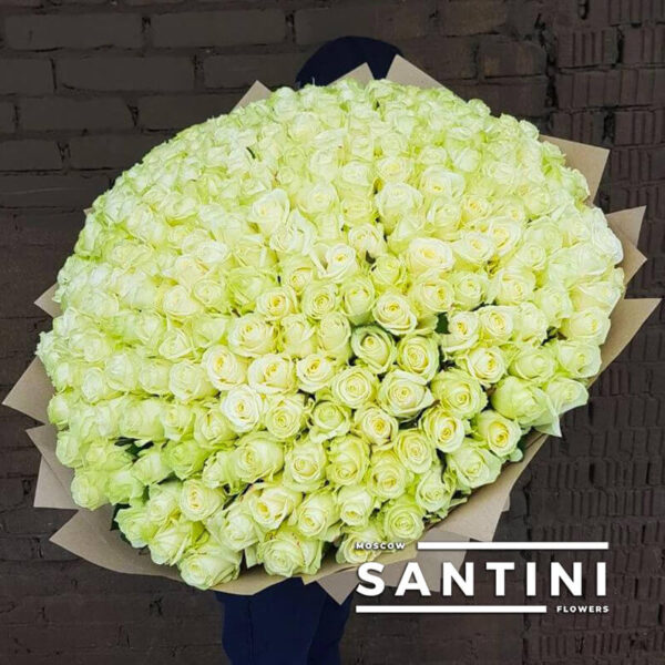 151 белая роза 80 см