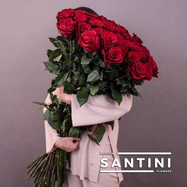 Высокие розы - 110 см